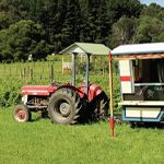 FIELDERBERRY FARM